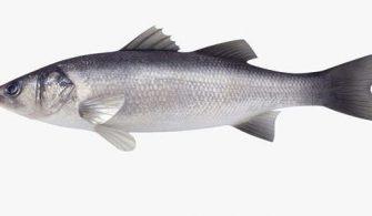 Levrek Balığı Hakkında Bilgi; Faydaları ve Nasıl Pişirilir?